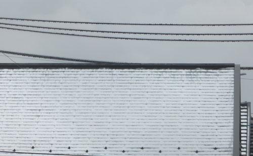 4月なのに雪です。Σ(|||▽||| )